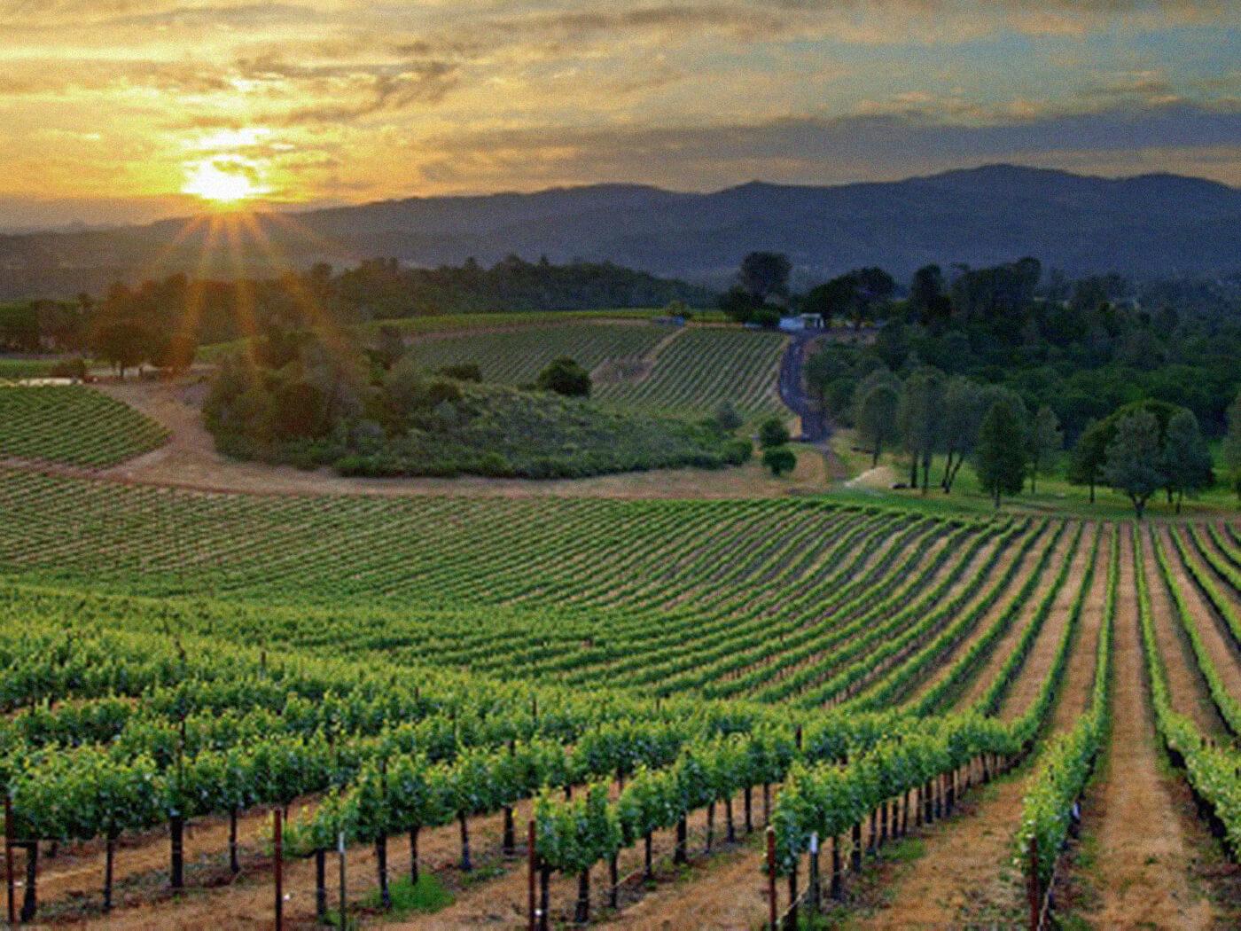 Aggelakis Winery