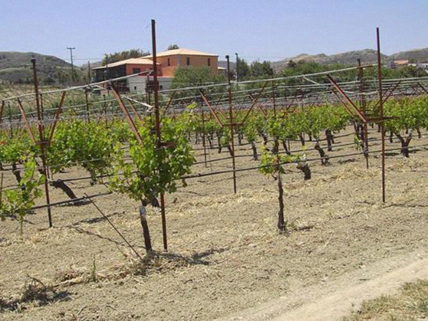 Winery Nikos Gavalas