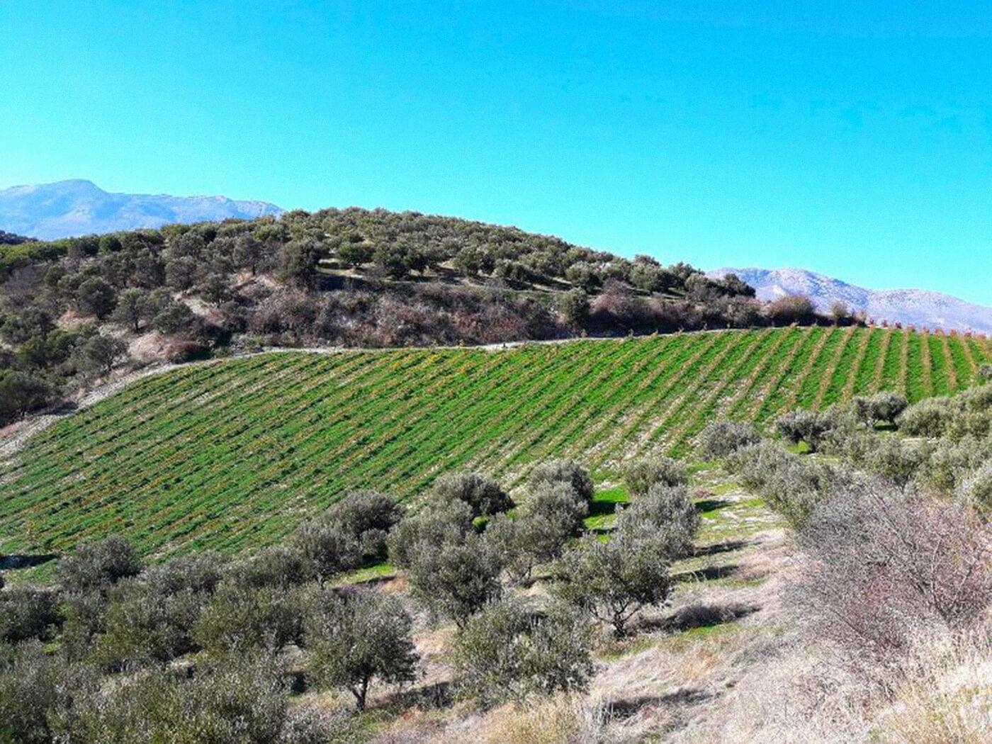 Louloudis Winery