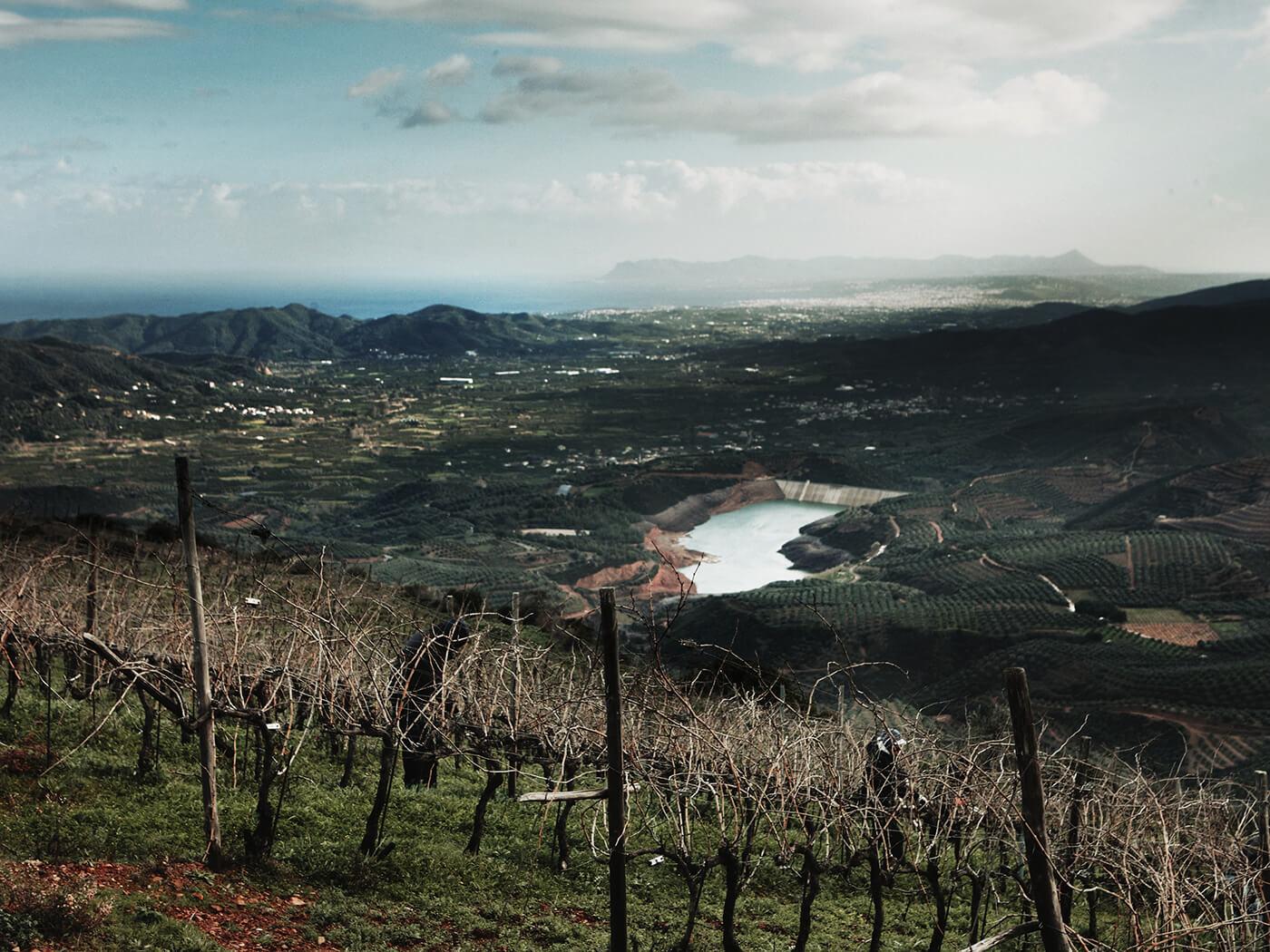 Manousakis Winery – Nostos Wines