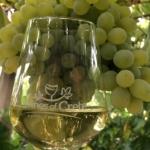 Το Βιδιανό – Μια παλαιά γηγενής λευκή ποικιλία που εξελίσσεται σε σύγχρονη «αρχόντισσα» των κρασιών της Κρήτης.