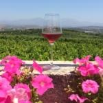 ΚΡΗΤΙΚΑ ΡΟΖΕ Τα γνωστά…άγνωστα κρασιά