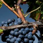 Τα αποτελέσματα του Decanter World Wine Awards για το 2021